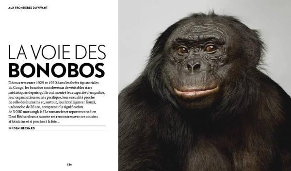 P136_157_Bonobos